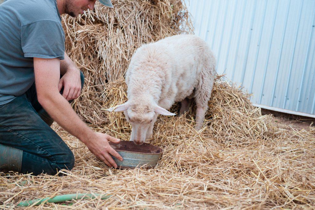 Kyle and lamb